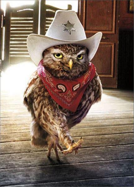 cowboy owl funny humorous birthday card  avanti press