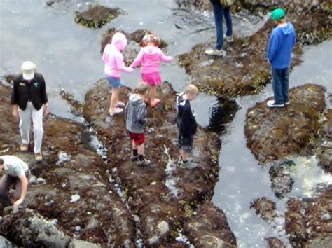 tide newport oregon tide pools picture of yaquina head outstanding natural