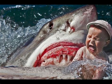 deadly shark attack caught on tape 18+ only human eaten