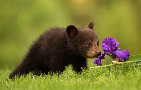 cute animals   wait  spring