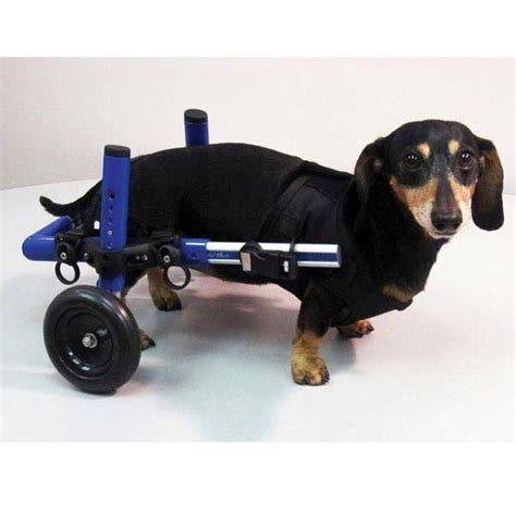 wheelchairs for dogs mini wheelchair blue and pink lovadog department store for dogs