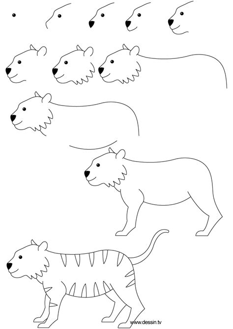 How To Draw A Simple Tiger Step By Step drawing tiger