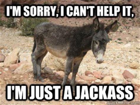 Funny Donkey Memes - im sorry i can t help it im just donkey meme picsmine