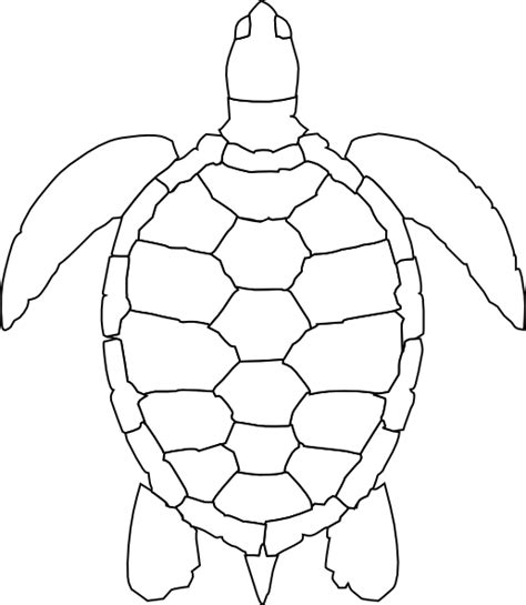 Turtle Outline Vector turtle outline clip at clker vector clip royalty free domain