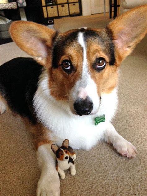 corgi beagle wlkm radio 95 felt corgi custom pembroke corgi mini felt by
