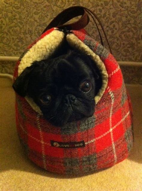 pug carrier harris tweed my