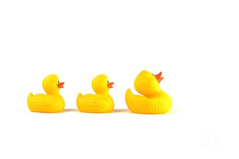 rubber st free rubber ducky cliparts co