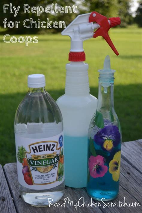 fly repellent for backyard best 25 natural fly repellant ideas on pinterest flys