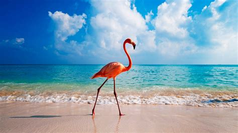 wallpaper flamingo bird beach ocean  animals