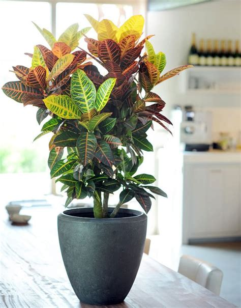 29 most beautiful houseplants you never knew about balcony garden web