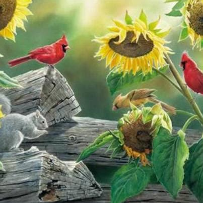 black sunflower seeds cardinals morning i this its country