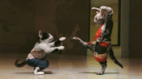 best fighting animals fighting pictures