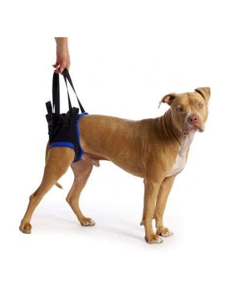 walkabout rear harness available at k9 carts the pet