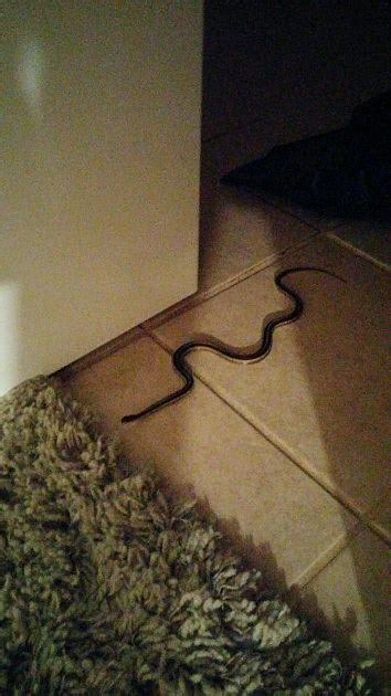 sick of the mother f snakes in my mother f house