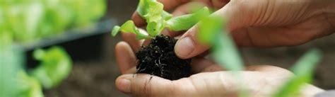 hornbach gummistiefel bepflanzen kompost bepflanzen with bepflanzen with