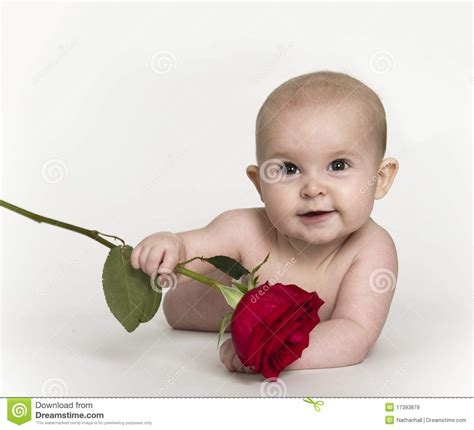 Floor Plan Free Download baby holding rose royalty free stock photos image 17393878