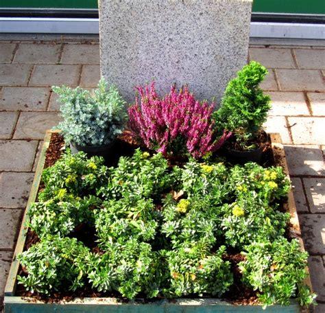 Pflanzen Sonne by Pflanzzensset Urnengrab Sonne Pflanzen Versand Harro S
