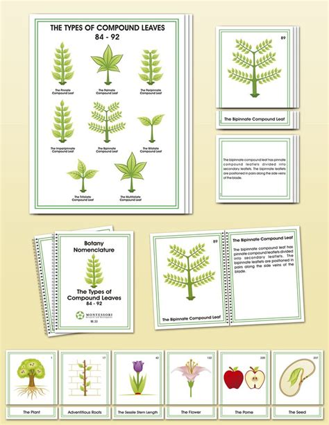 printable montessori lower elementary materials 209 best montessori nature flora plants gardening
