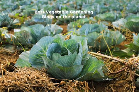 Top 75 Vegetable Gardening Blogs Websites For Vegetable Vegetable Gardening Blogs