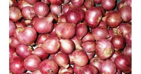 Bibit Bawang Merah Per Kg jual bibit bawang merah umbi varietas thailand
