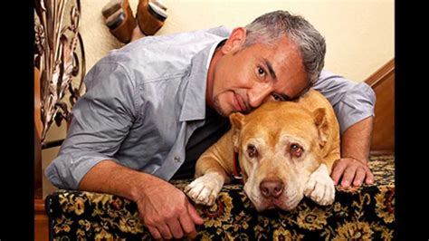 cesar puppy tribute to cesar millans beloved junior his heir pets4ever