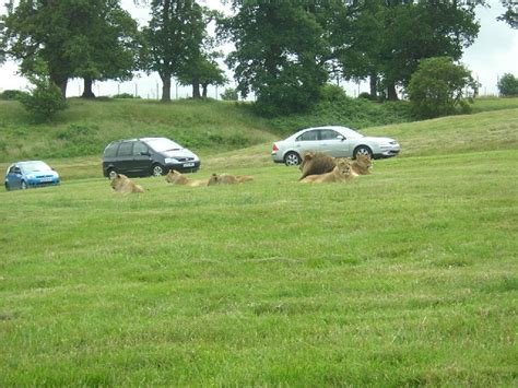 drive zoo near me file lion enclosure at woburn safari park geograph org