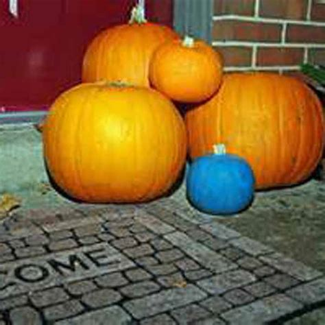 significance of pumpkin in if you see teal pumpkins this this is what it
