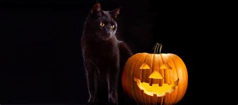 imagenes halloween gato imagenes de gatos halloween imagui