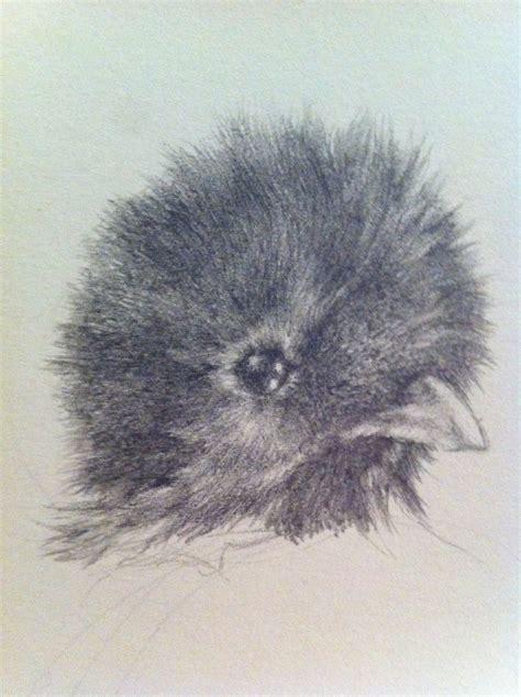 imagenes de quetzal a lapiz dibujo a l 225 piz de un quetzal arte taringa