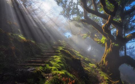 wallpaper sun rays grass tree natural staircase hd