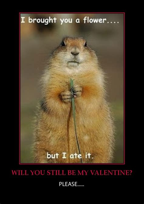 groundhog day jokes pictures age jokes or humour for the chronologically gifted