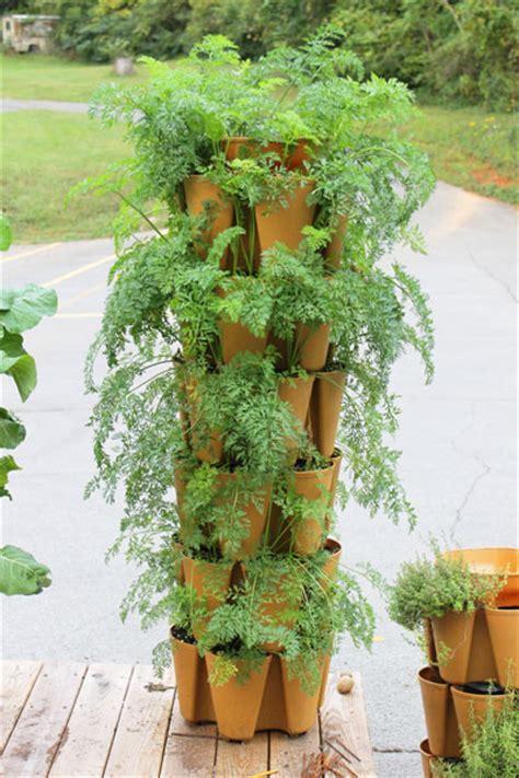 how to grow tons of carrots greenstalk vertical garden