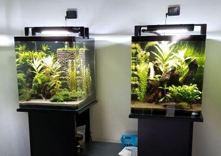 led beleuchtung aquarium erfahrungen led beleuchtung aquarium erfahrungen wie du eine aquarium
