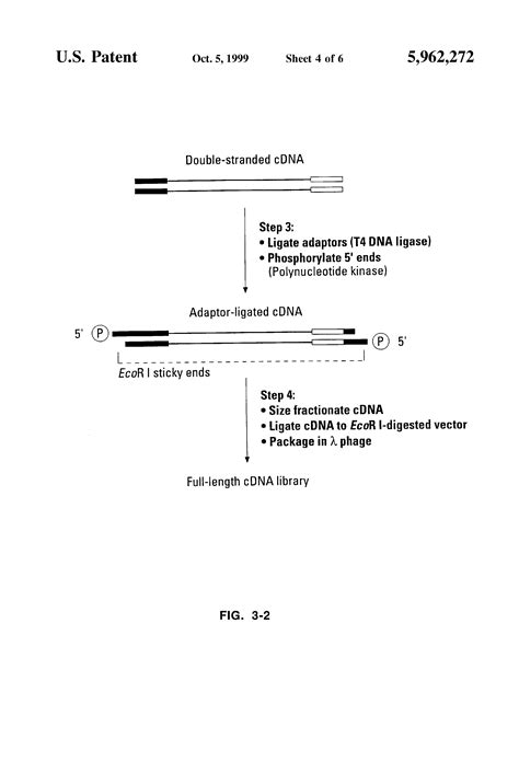 Patent Us5962272 Methods And Compositions For Full Length Cdna Cloning Using A Template Template Switching Oligo