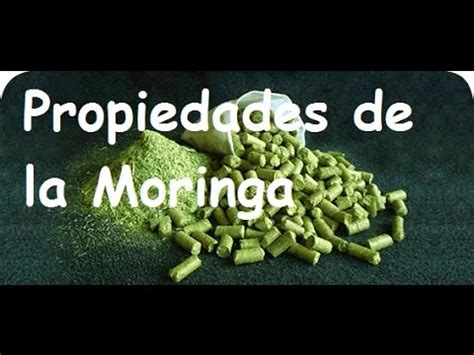 video de la planta de moringa youtube propiedades de la moringa youtube