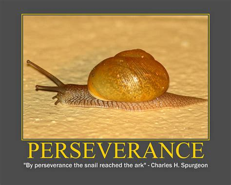 perseverance photograph by pmg images