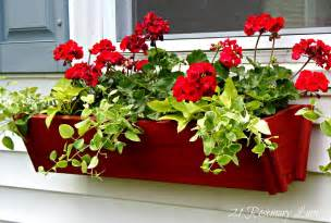 Fall Window Box Ideas - 21 rosemary lane the classic look of window boxes filled with geraniums