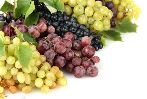 ate grapes 11 reasons to start grapes fitnea stay fit
