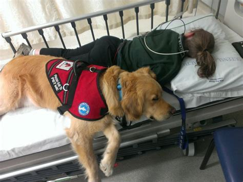 assistance dogs international international assistance dogs day august 7th