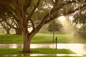 Sun Shower by Classic Florida Sunshower The Dis Disney Discussion