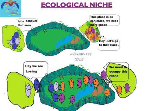 exle of niche microamaze ecological niche microamaze dixy
