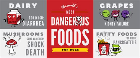 dangerous foods for dogs infographic the most dangerous foods for dogs and their side effects designtaxi