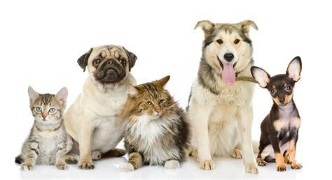 a pet pet biography custom package pet biographies