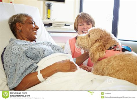hospital therapy pet therapy visiting senior patient in hospital royalty free stock photos