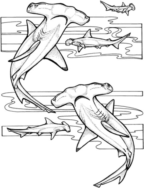shark head coloring page hammerhead sharks coloring page supercoloring com