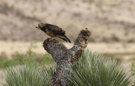 Birds Audubon New Mexico
