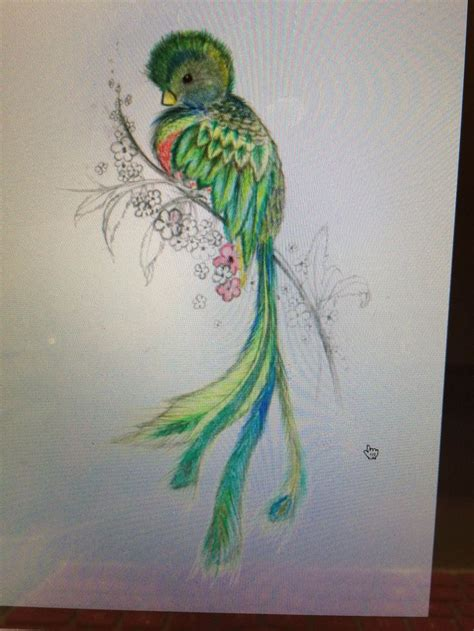quetzal tattoo guatemalan quetzal bird tattoos www imgkid the