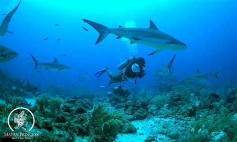 dive roatan roatan honduras a diverse scuba diving destination