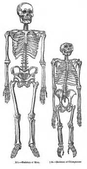 vintage halloween clip art skeletons the graphics fairy