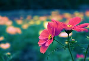 Cute Plants by Cute Free Pictures Cute Flower Pictures